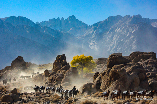 100 Mules on the trail, Mt. Whitney in the background.  Photo by Lou Roeser.